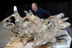 """The fossil of a dinosaur has been discovered ona Canadian riverbank, where it had been entombed for 68 million years, and it is """"one of the most unusual horned dinosaurs ever discovered."""" The scientists have described it as one of…"""