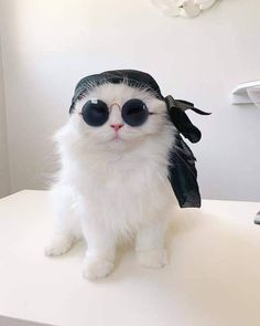 Woooow Look like BOSS - your daily dose of funny cats - cute kittens - pet memes - pets in clothes - kitty breeds - sweet animal pictures - perfect photos for cat moms Cute Cats And Kittens, Baby Cats, Cool Cats, Kittens Cutest, Cute Baby Animals, Animals And Pets, Funny Animals, Funny Horses, Cute Cat Memes