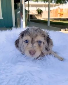WE POST VIDEOS LIKE THIS DAILY! 🥰 #puppy #cats #dogs #animals #animalsnature #nature #cute #cutecats #cutedog #cutepuppy #chicken Funny Animal Videos, Cute Funny Animals, Funny Animal Pictures, Animal Memes, Funny Dogs, Cute Cats, Animal Pics, Cute Dogs And Puppies, I Love Dogs