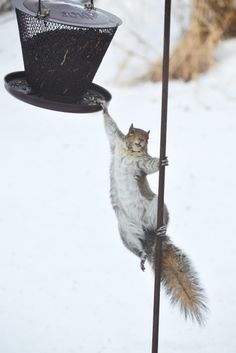 When it comes to squirrels, is it better to join them than fight them? - The Washington Post