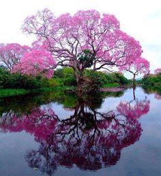 Árboles reflejados en el agua