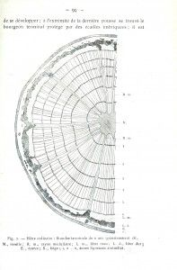 line drawing of plant and animal cells