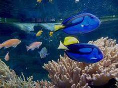 Znalezione obrazy dla zapytania oceanarium gdynia