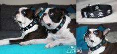 dog collar / Bloom Dog Design / Boston Terrier