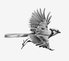 Skylark Wine Illustrated by HelloVon Lark Tattoo, Marlborough Wine, Bird Artists, Colossal Art, Skylark, Graphite Drawings, Bird Drawings, Beautiful Birds, Adult Coloring