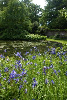 Pond, flowers and wall. Dyrham Park