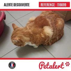 28.12.2017 / Chat / Clermont-FerrandPuy-de-Dôme / France