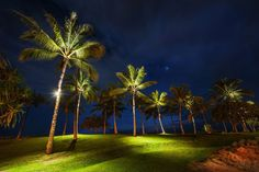 The palm trees on #Oahu at night from  #treyratcliff at www.StuckInCustom... - all images Creative Commons Noncommercial.