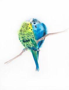 """Волнистый попугайчик птицы """"я все еще люблю тебя"""" - Попугаи поцелуй - любовь пара волнистый попугайчик попугай - птицы пары - День Святого Валентина"""