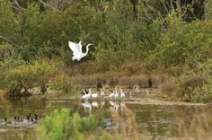 Space Coast Birding & Wildlife Festival - last week of January - the largest festival of it's kind in the USA!
