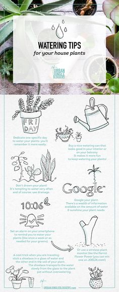Watering tips for Urban Jungle Bloggers!