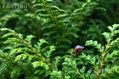 Lady Bug Photographed by Akaash Ram - Tree- Nature - Animals - India - FairMail - Fair Trade Photos - IAKR-0266