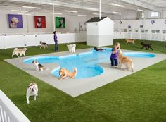 JFK Airport to open world's first animal air terminal w/posh dog/cat resort. , NY's JFK Airport to open world's first animal air terminal w/posh dog/cat resort. , NY's JFK Airport to open world's first animal air terminal w/posh dog/cat resort. Pet Shop, Luxury Dog Kennels, Dog Boarding Near Me, Cat Boarding, Pet Hotel, Pet Resort, Dog Rooms, Dog Daycare, Animal Shelters