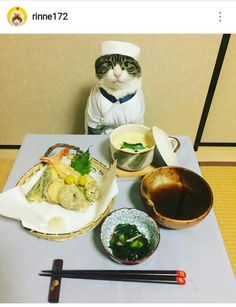 Tamashi No Cosplayers (魂のコスプレイヤー): El Gato Chef Cosplayer, Maro Cute Baby Animals, Animals And Pets, Funny Animals, Catch The Cat, Neko, Cute Cats, Funny Cats, Cat Dressed Up, Cat Cosplay