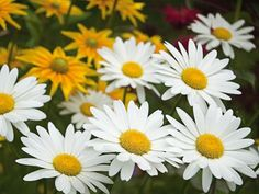 Lure beneficial insects to your garden with this assortment of annuals and perennials.