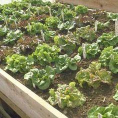 Beginner's Guide to Organic Gardening
