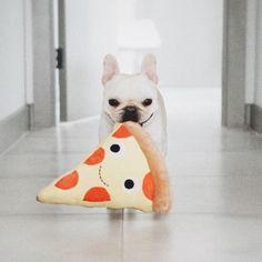 """Pizza, pizza, pizza!!!"", Funny French Bulldog, @piggyandpolly on Instagram"