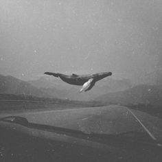 Sky whale b&w Space Whale, Gfx Design, Miss Peregrines Home For Peculiar, Whale Art, Wale, Dark Photography, Surreal Art, Dark Art, Collage Art