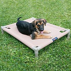 @Overstock - Give your beloved pet a comfortable place to rest with this cozy pet cot by Hugs. The portable, lightweight cot is designed with a raised mesh bed that increases air circulation to help your pet stay cool and dry even on the hottest days.http://www.overstock.com/Pet-Supplies/Hugs-Indoor-Outdoor-Pets-Large-Mesh-Cool-Cot/4243610/product.html?CID=214117 $49.99
