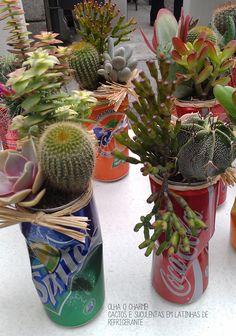 cactos-suculentas-plantas
