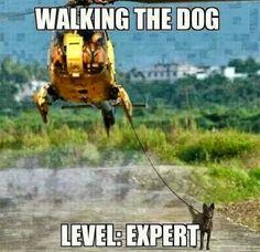 Walking the dog. Expert Level