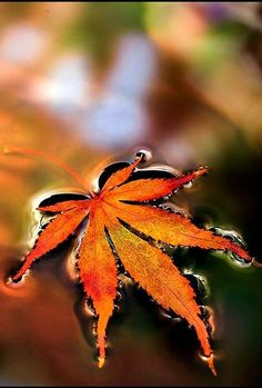 Autumn ... Leaf floating on water ... orange, yellow, brown, green