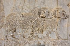 Photo of Ram sheep. Cyrus The Great, Ancient Persian, Iran, Sheep, Palace, Vintage World Maps, Photo Galleries, Statue, Antiques
