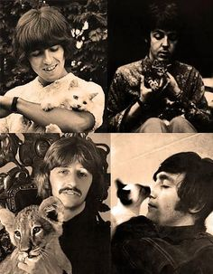 The Beatles with felines.