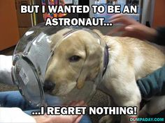 15 Funny Dogs Who Have No Regrets
