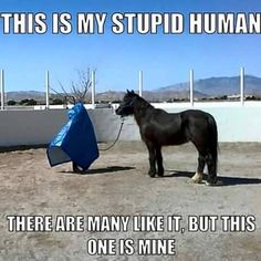 Horse's - Horses Funny - Funny Horse Meme - - Horse's The post Horse's appeared first on Gag Dad. Cute Animal Memes, Animal Jokes, Cute Funny Animals, Funny Animal Pictures, Cute Baby Animals, Funny Horse Memes, Funny Horses, Horse Humor, Funny Horse Sayings