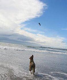 St. George Island, Florida Pet Friendly Beaches