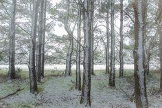 https://flic.kr/p/CN3cXQ | Ashdown Forest