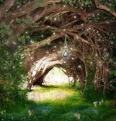 enchanted forest tunnel