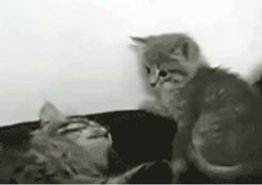 [gif] waking me up in the morning