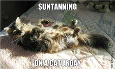 sun tanning on #caturday