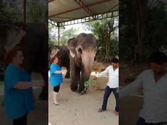 Elefanten Streicheln - YouTube Elephant, Pure Products, Reading, Youtube, Indian Elephant, Elephants, Reading Books, Youtubers, Youtube Movies