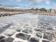 Salt pans - these could be Tamarin or Black River area as there are quite a few as so close to the sea