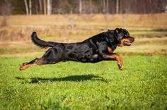 Jak odnaučit psa utíkat