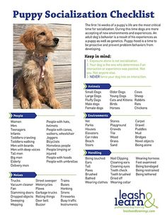 Leash and Learn   Free Training Tips   NYC Dog Training