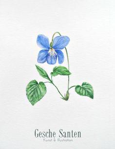 Märzveilchen - Aquarell -2016 (24x32cm) Viola odorata- botanische Illustration