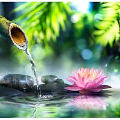 décoration zen relaxe ambiance SPA papier peint personnalisé tapisserie numérique sur mesure lotus rose