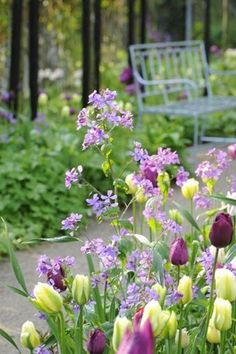 Just love the lemon yellow and deep wine colour tulips with lilac stocks. Beautiful.