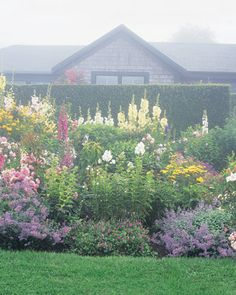 This bed, bursting in late summer with robust garden classics including phlox, hollyhocks, and roses, is as successful in its interplay of heights as it is in colors. Hollyhocks and sunflowers rise at the back, while catmints and cranesbills form a neat edging at the front.