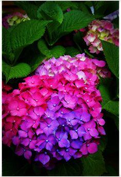 Beautiful color... amazing