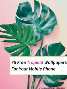75 Tropical Wallpapers Free For Your Mobile Phone