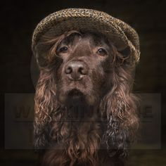 Elvis during his Hayloft session. #cockerspaniel #cocker #hayloftsession #dogphotoraphy #dogphotographersheffield