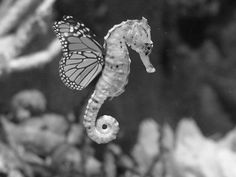sea horse with butterfly wings