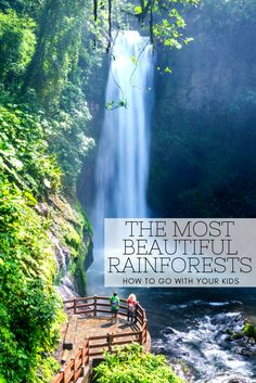 Tips for Visiting the Rainforest with Kids. Ever want to go to a rainforest but not sure how to navigate it with kids? We have the answers so you can plan your next family trip!