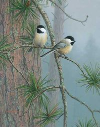 Red Pine and Chickadees painting by Jim Hautman|WildWings