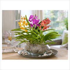 vanda orchids...